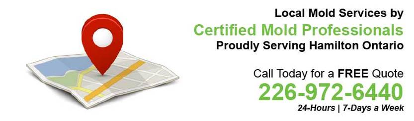 360 Mold Services - Certified Mold Professionals in Hamilton, Ontario Banner