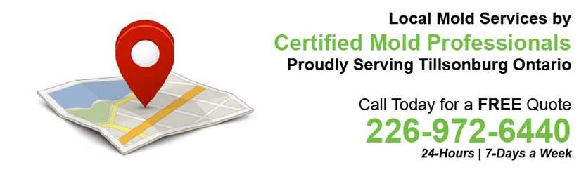 360 Mold Services - Certified Mold Professionals in Tillsonburg, Ontario Banner