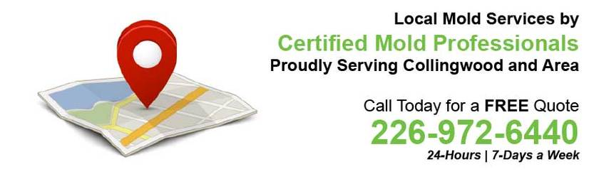 360 Mold Services - Certified Mold Professionals in Collingwood, Ontario Banner